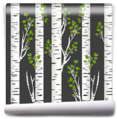 Fototapeta - Birch trunks in night