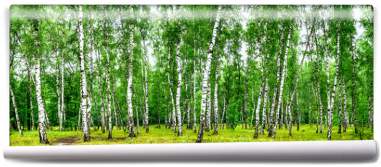 Fototapeta - Birch grove with a road on sunny summer day, summertime landscape
