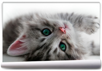 Fototapeta - Kitten rest - isolated