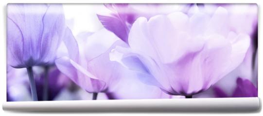 Fototapeta - tulips pink violet ultra light