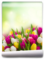 Fototapeta - bouquet of  pink, purple and white  tulips