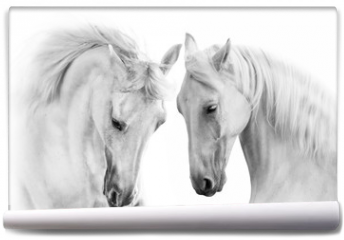 Fototapeta - Couple of white horse on white background