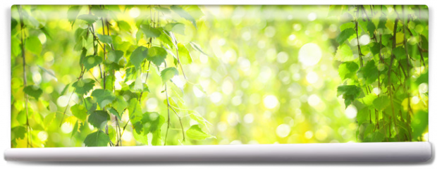 Fototapeta - Green birch  leaves branches, green,  bokeh background. Nature spring background.