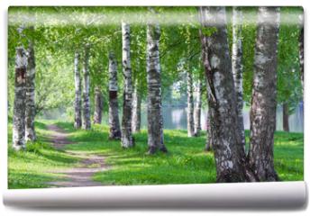 Fototapeta - a path passing through a birch alley
