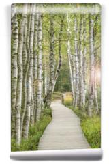 Fototapeta - Holzsteg inmitten eines traumhaften Birkenwald in Deutschland