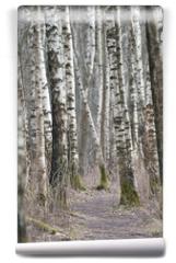 Fototapeta - Birch trees forest at spring