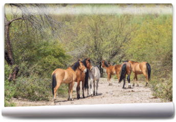 Fototapeta - Wild Horses Near the Salt River in the Arizona Desert