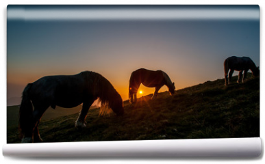Fototapeta - horse grazing in the mountains at sunset