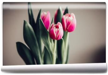Fototapeta - Schlichter Strauß Tulpen vor neutralem Hintergrund