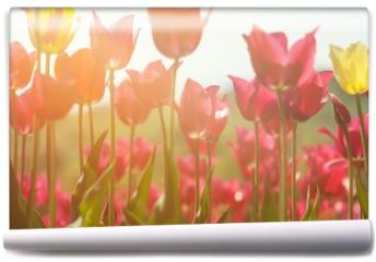 Fototapeta - Tulips.