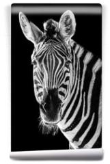 Fototapeta - Zebra Closeup II
