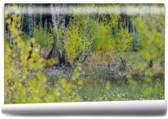 Fototapeta - Wiosenny Las Bzorzowy