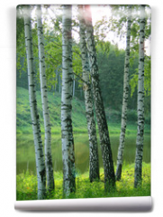 Fototapeta - Young birch trees on the shore of a forest lake on a clear summer day.Vertical orientation..
