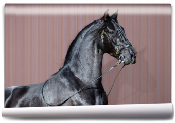 Fototapeta - Portrait of black Spanish horse.