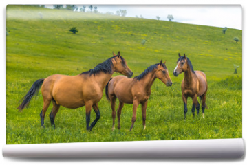 Fototapeta - Horses in the steppe. Pets graze in the spring steppe.