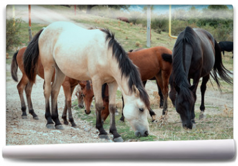 Fototapeta - group of horses glazing near the road