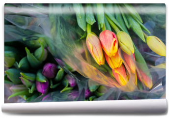 Fototapeta - Tulip. Beautiful bouquet of tulips. Colorful tulips. Flower plants cultivation in greenhouse
