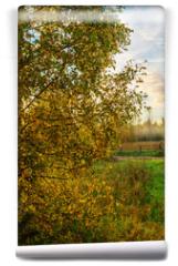 Fototapeta - birch foliage at sunrise
