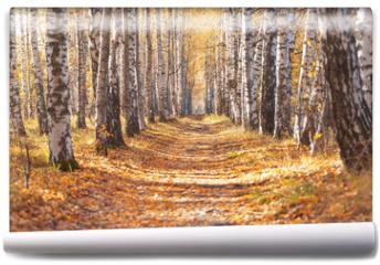Fototapeta - Autumn birch alley.walkway between trees for a walk.