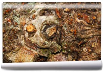 Fototapeta - knorriges Birkenholz mit vielen Zweigresten