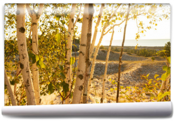 Fototapeta - Birch trees with soft gentle wind for relaxing spa and wellness concept.