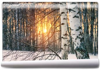 Fototapeta - Birch tree in winter forest at sunset
