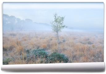 Fototapeta - lone birch tree on meadow at frosty morning