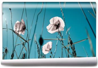 Fototapeta - Mohnblumen Papaver rhoeas