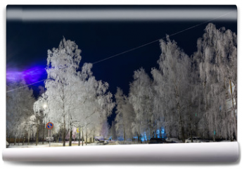 Fototapeta - Frost decorated birch with frost. Urban landscape
