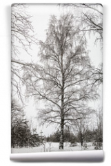 Fototapeta - branches of a birch tree covered with snow in winter forest
