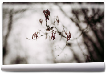 Fototapeta - Branches of a birch tree without leaves during winter