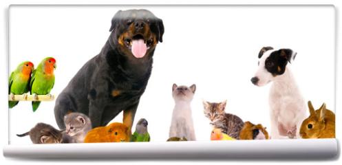 Fototapeta - montage animaux