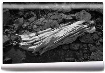 Fototapeta - old log