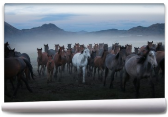 Fototapeta - wild horses and cowboys.kayseri turkey