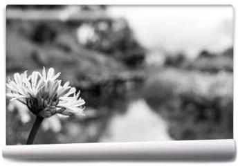 Fototapeta - Flor preto e branco fundo desfocado