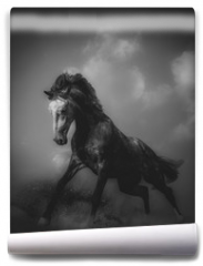 Fototapeta - Young stallion in a dramatic shot