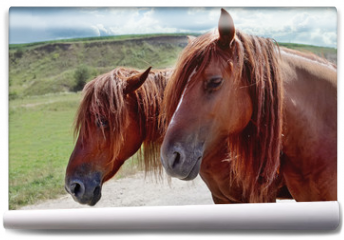 Fototapeta - Red horses with long mane against sky