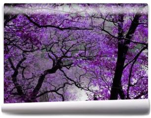 Fototapeta - purple spring