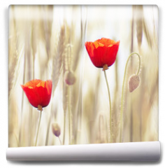Fototapeta - Poppies