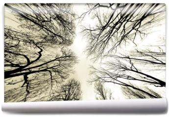 Fototapeta - trees