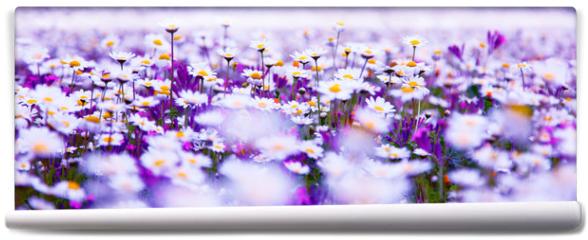 Fototapeta - Daisy field