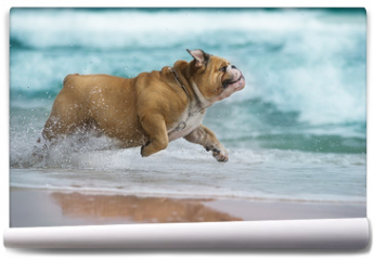 Fototapeta - Happy dog Bulldog running at the sea
