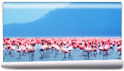 Fototapeta - African flamingos