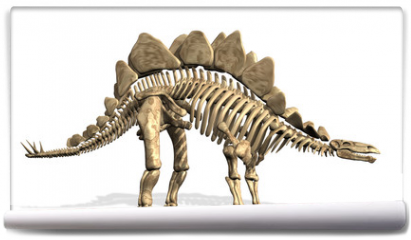 Fototapeta - Stegosaurus Skeleton