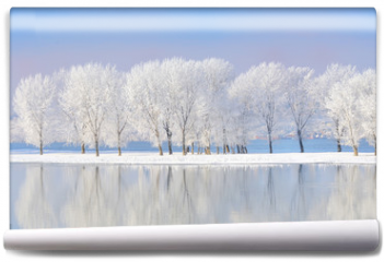 Fototapeta - winter trees covered with frost