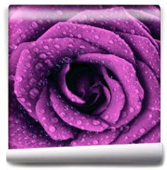 Fototapeta - Purple dark rose background