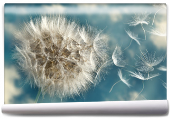 Fototapeta - Dandelion Loosing Seeds in the Wind