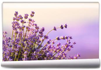 Fototapeta - Lavender flowers bloom summer time