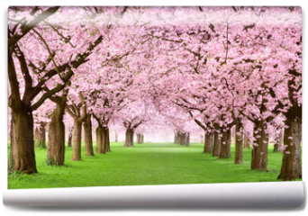Fototapeta - Gartenanlage in voller Blütenpracht