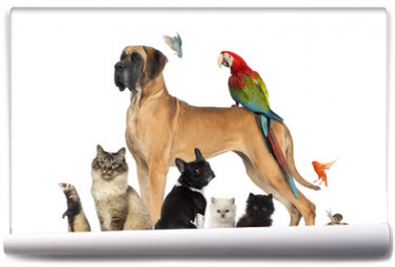 Fototapeta - Group of pets - Dog, cat, bird, reptile, rabbit,...
